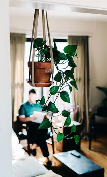 4 plantas resistentes que requerem poucos cuidados
