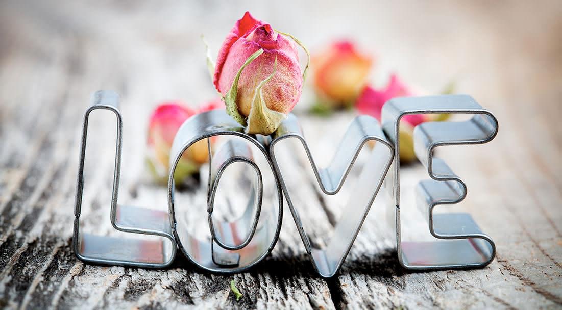 Plantas eternas com mensagens de amor para sempre