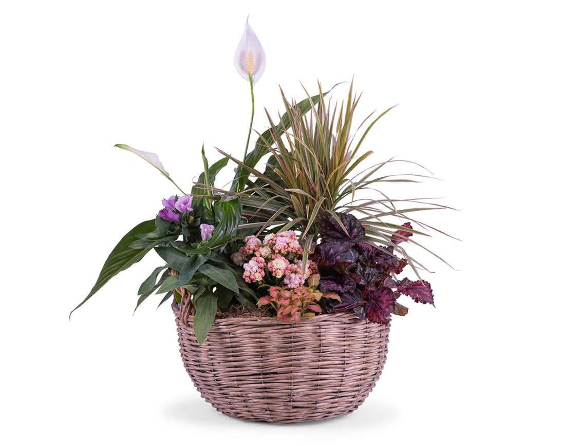 Plantas, flores e cestas de plantas para o seu pai