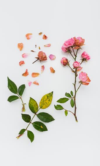 Ramos de flores naturais, como secar e conservá-los