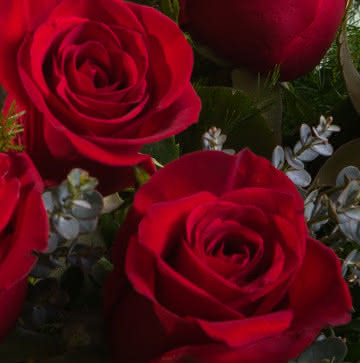 Enviar flores de condolências e pêsames