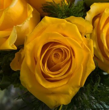 Arranjo de Rosas Amarelas