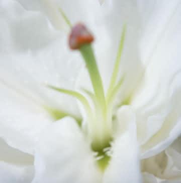 Flores funerárias para um enterro