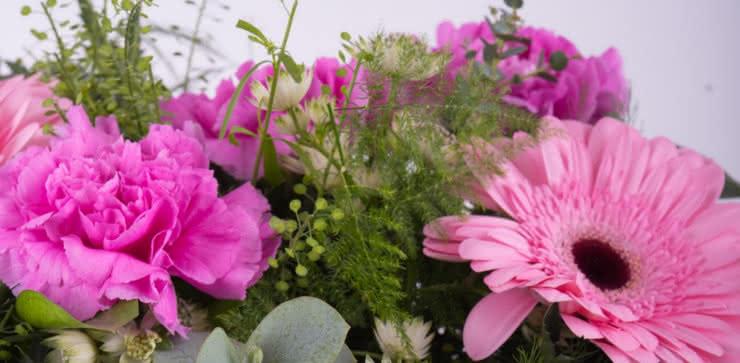 Enviar gerberas e cravos cor-de-rosa ao domicílio