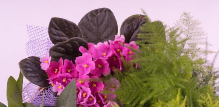Enviar cesta de plantas ao domicílio