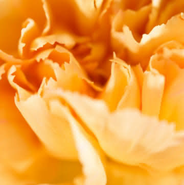 Enviar coroa de flores de condolências e pêsames