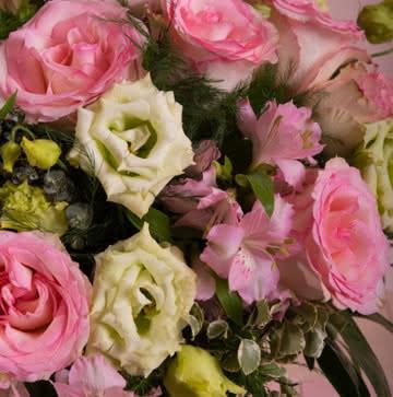 Enviar lisianthus em tons cor-de-rosa