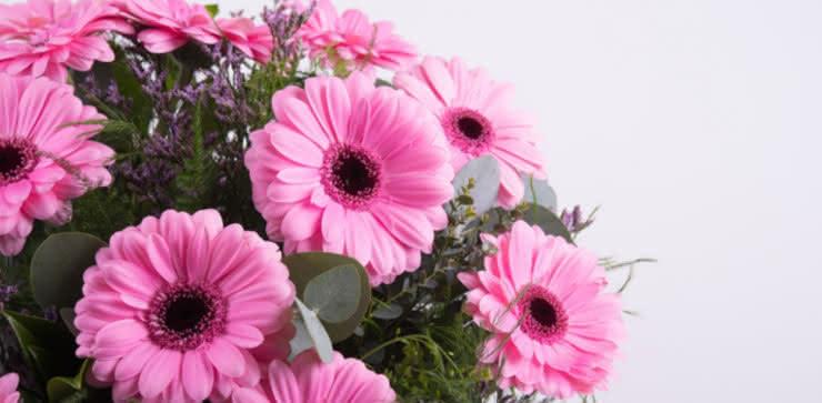 Enviar arranjo de gerberas em tons cor-de-rosa e roxo ao domicílio