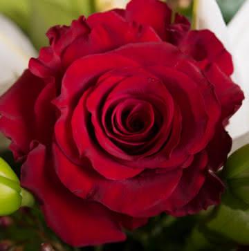 Enviar arranjo de rosas vermelhas