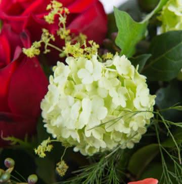 Enviar cesta de rosas
