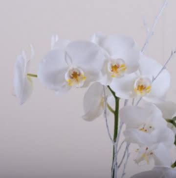 Enviar orquídeas brancas