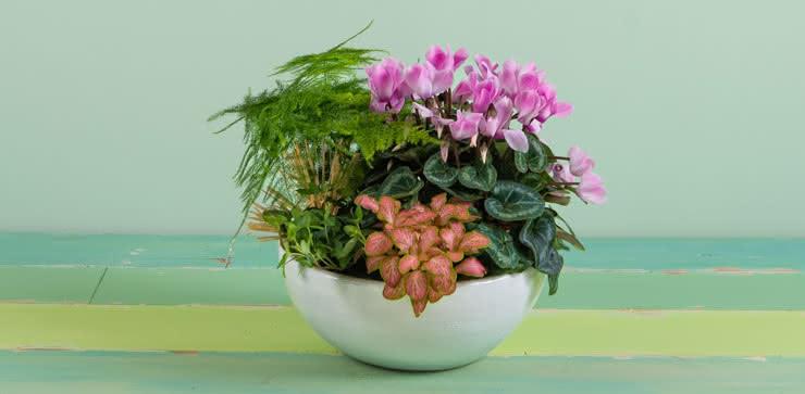 Enviar plantas ao domicílio