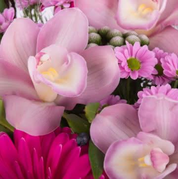 Enviar rosas e gerberas