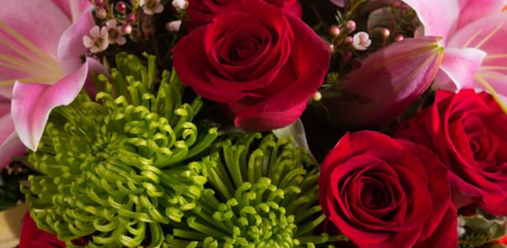 Enviar rosa, liliums e gerberas ao domicílio