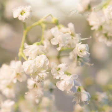 Arranjo rosas brancas
