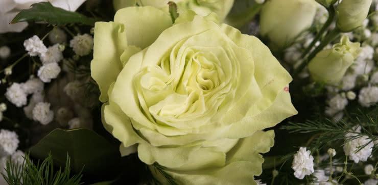 Enviar arranjo de rosas em tons brancos e amarelos ao domicílio